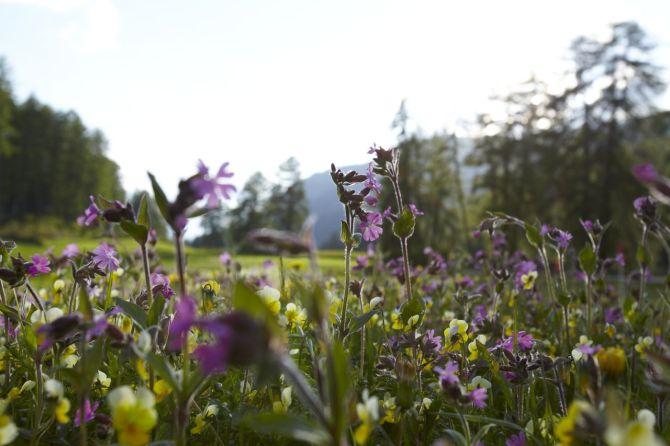 Blumenwiese Unterengadin