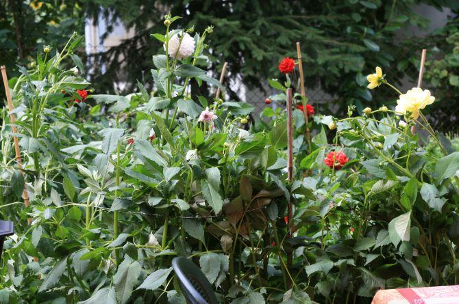 Blumengärtli