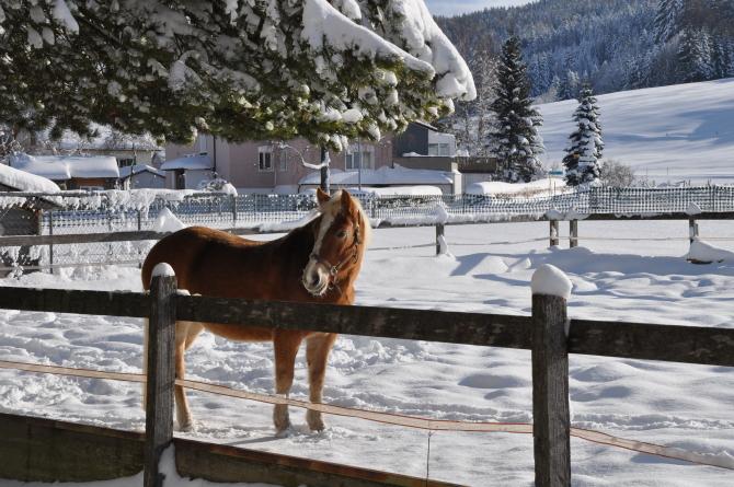 Pferdeplatz Winter