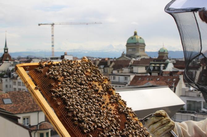 Bienen auf Sky Terrace